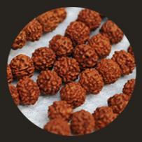 Offering-Rudraksha