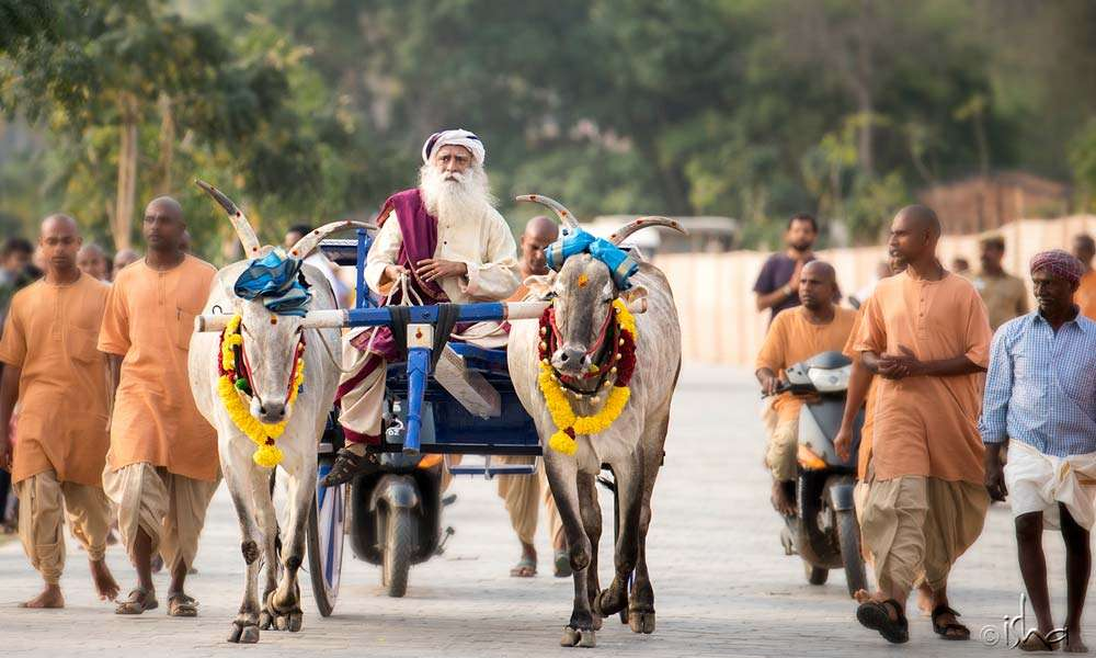 Sadhguru riding a bullock cart to Adiyogi