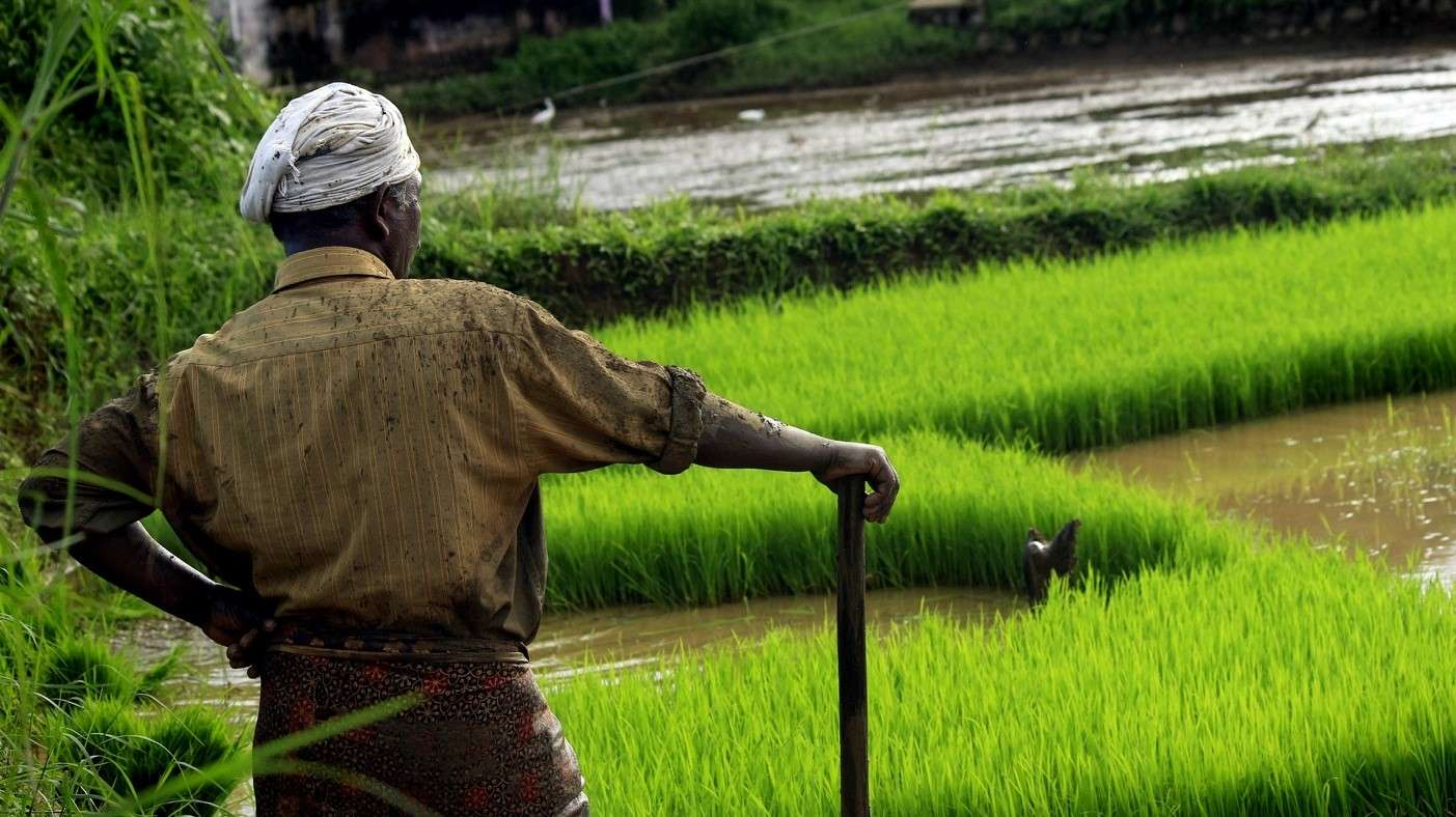 3-reasons-for-indias-water-crisis-farmer-with-plough-in-the-field