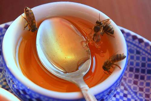 alternatives for sugar - honey