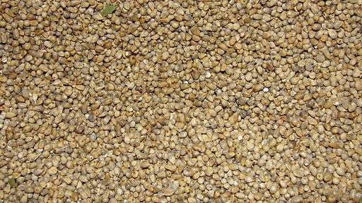 Alternatives of refined grains - pearl millets