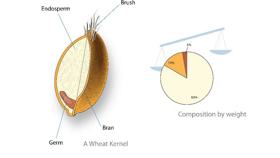 Wheat kernel nutrition