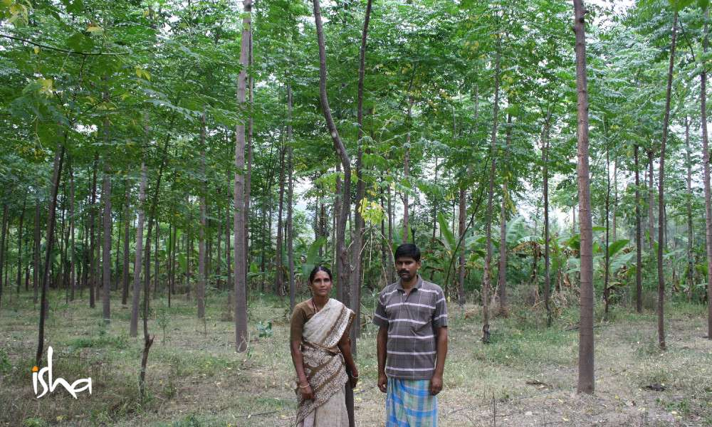 a-movement-that-started-with-a-seed-agroforest