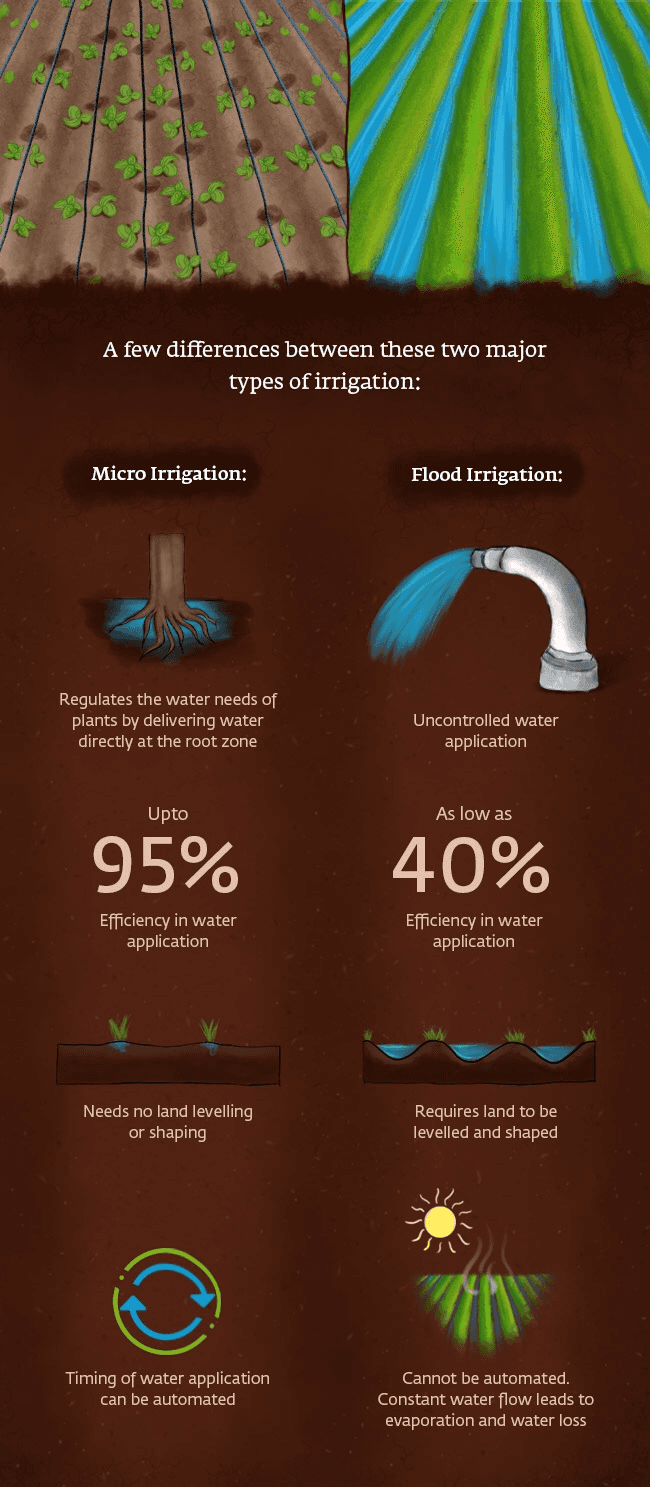 How Are Flood Irrigation and Micro-Irrigation Different?