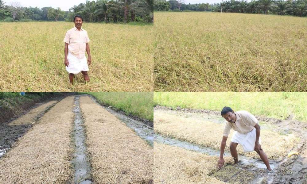 paddy-machine-cultivation