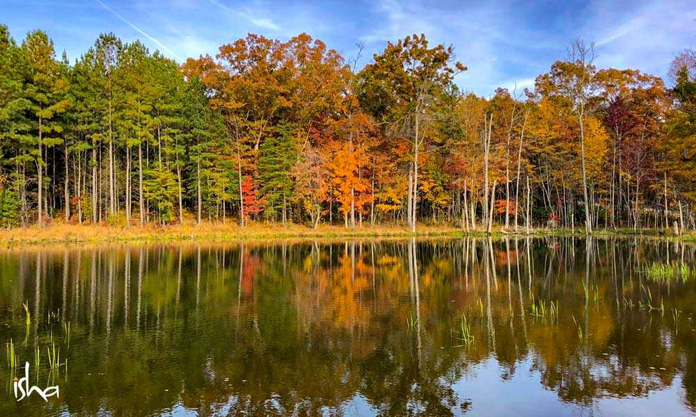 Autumn landscape of the Isha Institute of Inner Sciences, TN, USA | One Mega Life