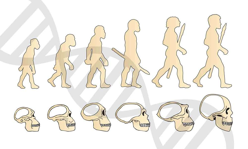 human-beings-peak-of-evolution-2