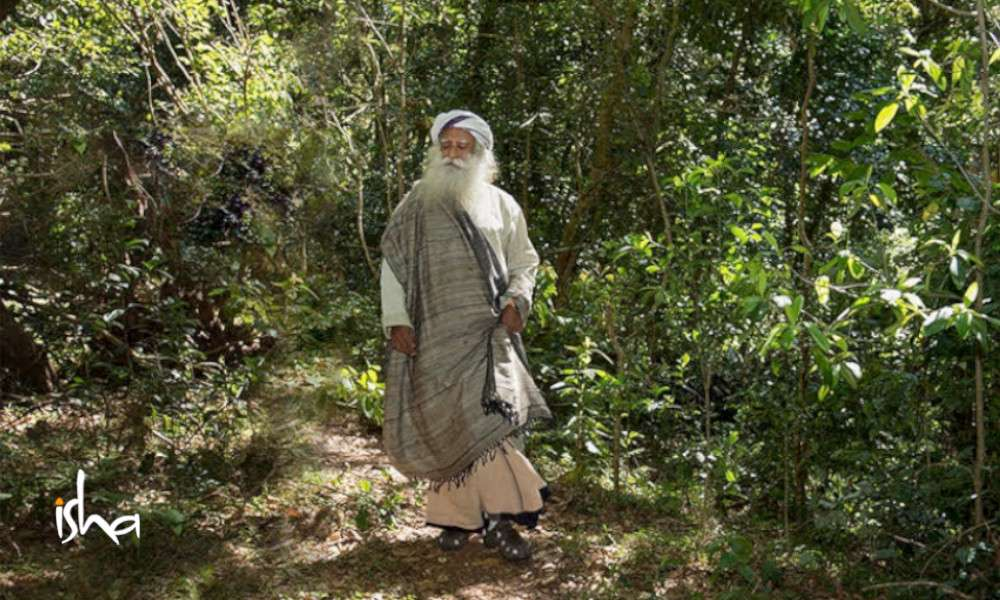 Sadhguru Wisdom Article | Agroforestry Makes the Farmer Rich and Saves the River