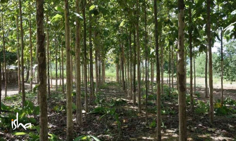 The Complete What, Why & How of Agroforestry