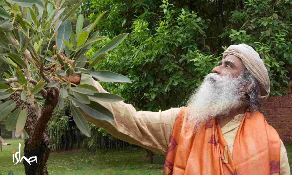 sadhguru wisdom article | freeing the farmers hands through agroforestry and micro-irrigation