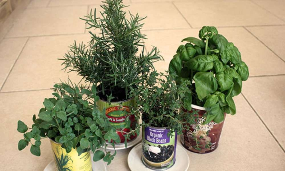 grow-your-own-container-garden