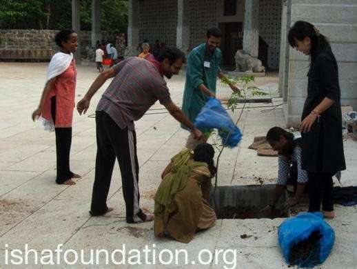 tree planting,isha foundation