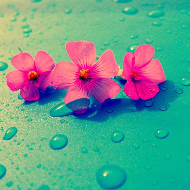 Three flowers - Lessons of Life - Three Things to Remember