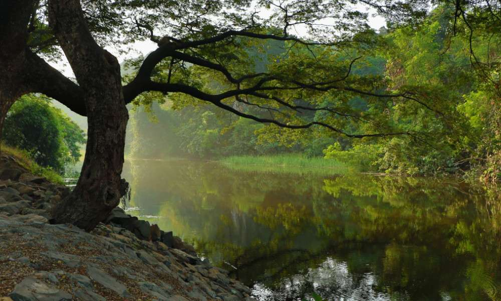 isha blog article | Planting Trees Is the Only Way to Make Rivers Flow Again