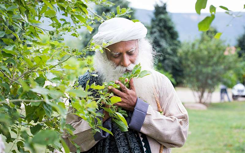 Quotes about life - Devotion, Sadhguru says, means to keep all the doors and windows open, so that one is always available to grace.