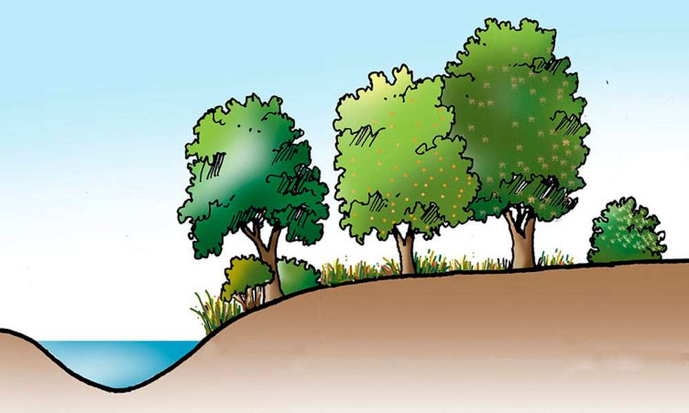 isha blog article | Agroforestry Along River Banks: How Exactly Do Trees Help?