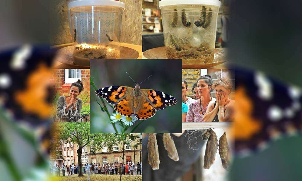 From a Cocooned Existence to a Liberated Life – Butterflies at the Isha Yoga Center, London