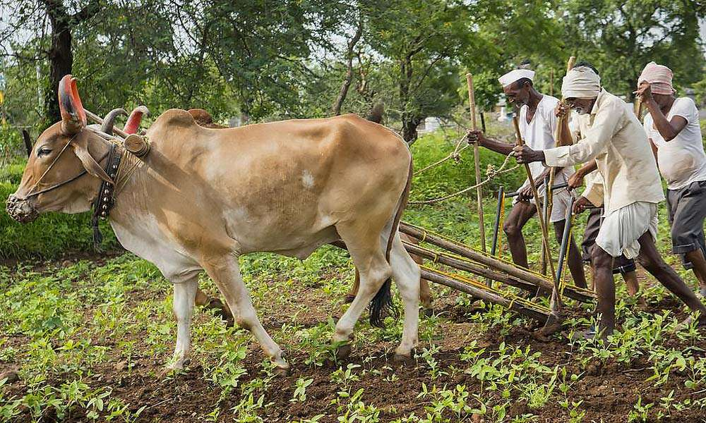 Saving India's Farmers by Saving India's Soils