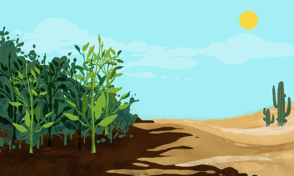 The Bad News About Our Soil and What it Means for Us