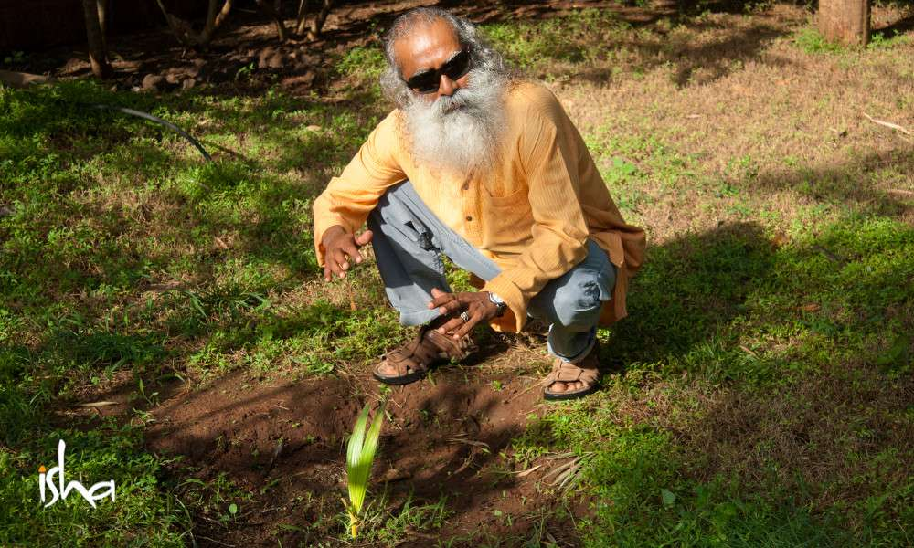 sadhguru wisdom article | cauvery calling | saving indias soil through better farming