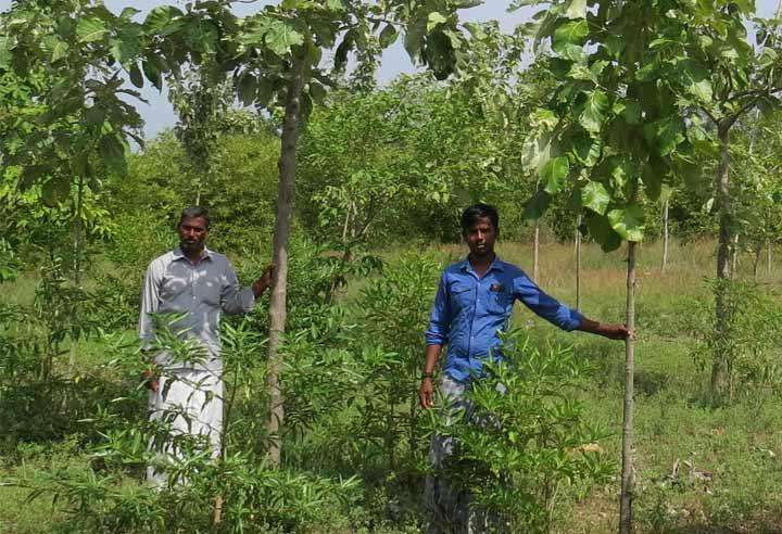 importance of agroforestry