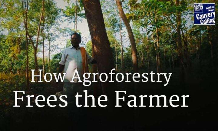 sadhguru wisdom video | How Agroforestry Frees the Farmer