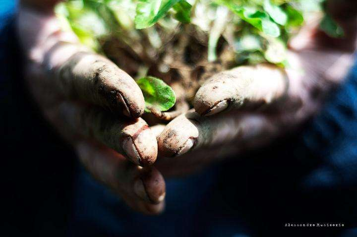 Prithvi Prema Seva – Being in Touch with Mother Earth