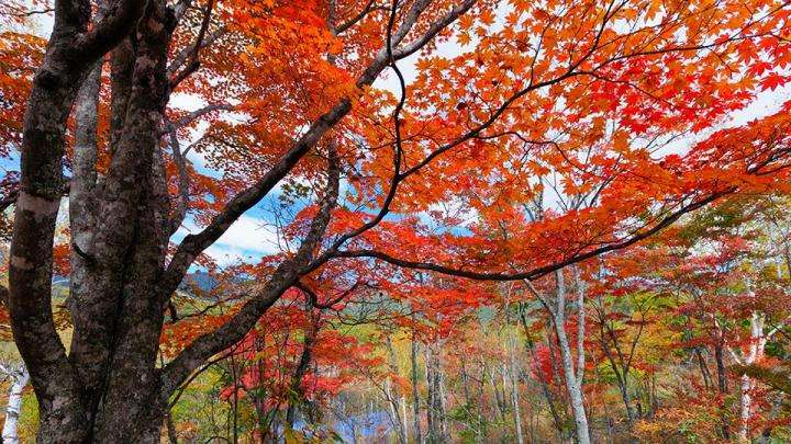 The True Miracle of Life - Fall Foliage