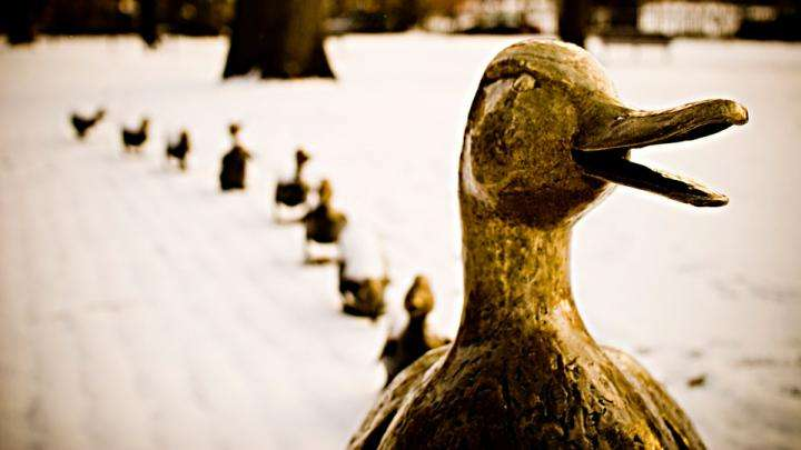 Mollard Ducks - Leaders should be inclusive - Podcast Tuesday
