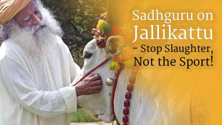 Sadhguru on Jallikattu - Stop Slaughter, Not the Sport!