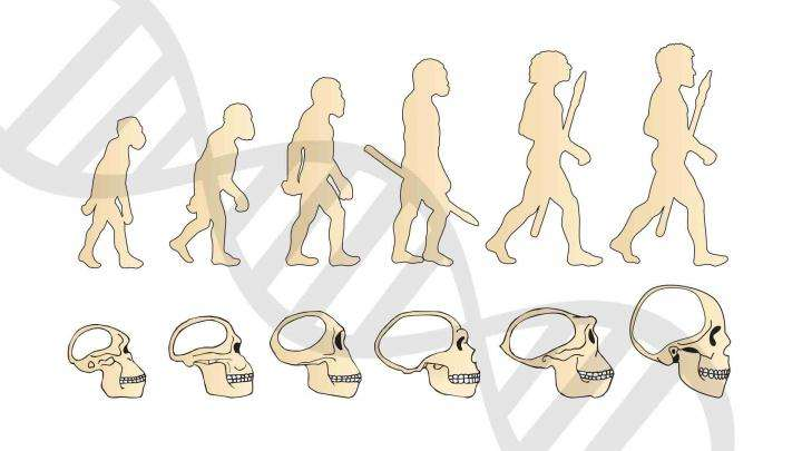 Human Beings – The Peak of Physical Evolution