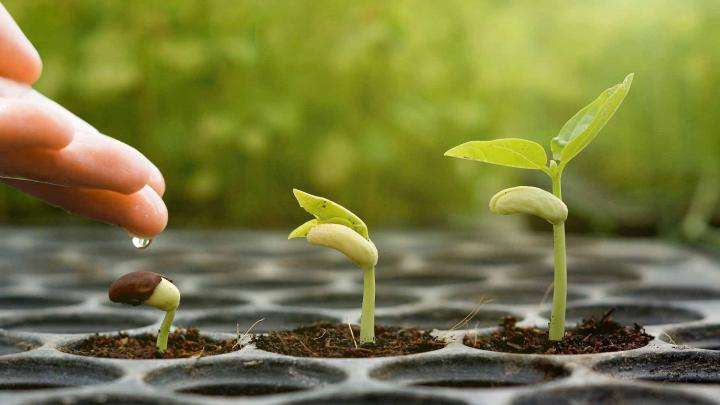 3 I's for Spiritual Growth – Letting the Sacred Seed Grow
