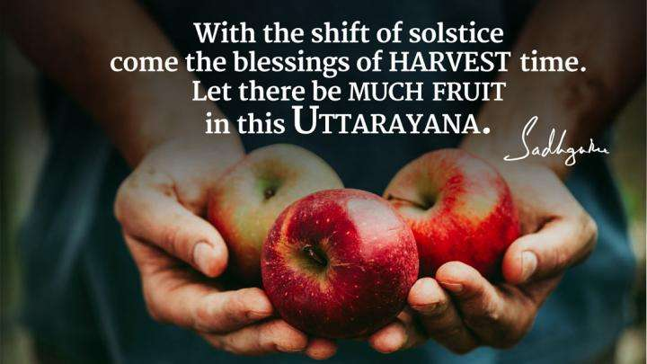 Sadhguru's Quotes on Harvesting