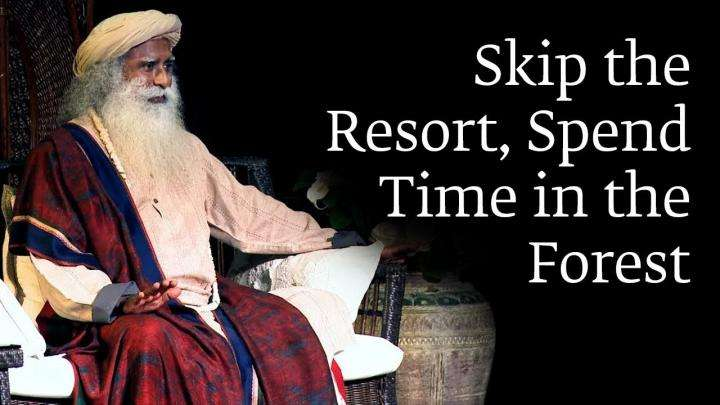 Skip The Resort, Spend Time In The Forest
