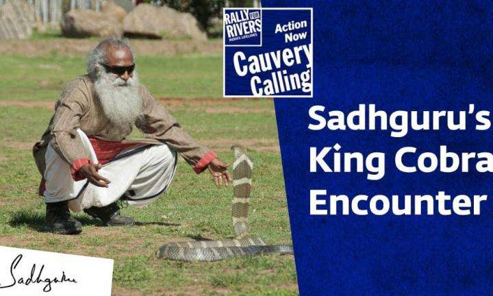 sadhguru wisdom video | Sadhgurus King Cobra Encounter ft Rakshit Shetty & Diganth